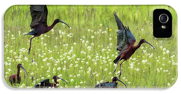 White-faced Ibis Rising, No. 1 IPhone 5 Case
