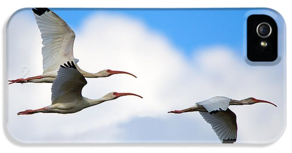 Ibis iPhone 5 Case - White Ibis Flock by Mike Dawson