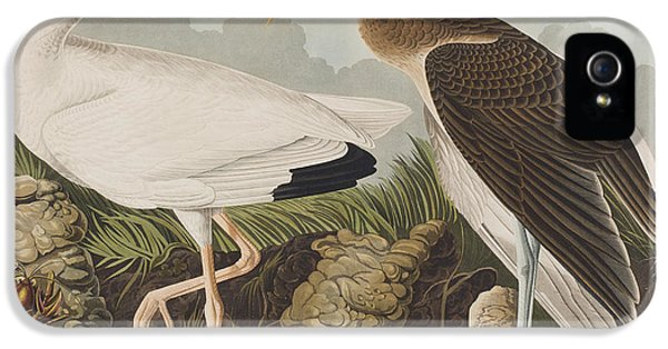 White Ibis IPhone 5 Case by John James Audubon