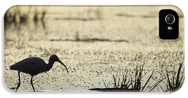 Ibis iPhone 5 Case - White Ibis Morning Hunt by Dustin K Ryan