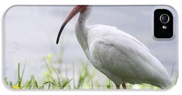White Ibis  IPhone 5 / 5s Case by Saija  Lehtonen