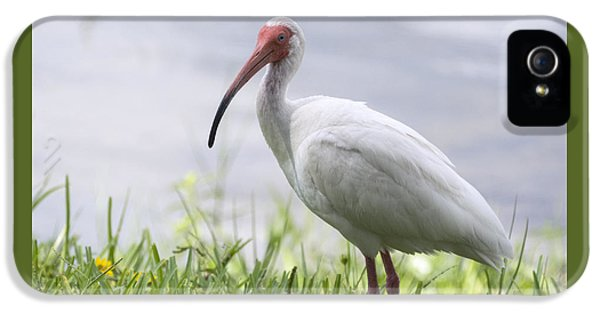 White Ibis  IPhone 5 Case by Saija  Lehtonen
