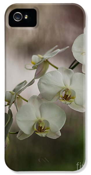 Orchid iPhone 5 Case - White Of The Evening by Mike Reid