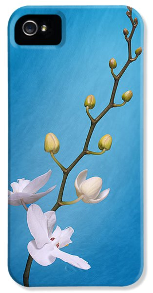 Orchid iPhone 5 Case - White Orchid Buds On Blue by Tom Mc Nemar