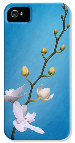 White Orchid Buds On Blue IPhone 5 Case by Tom Mc Nemar