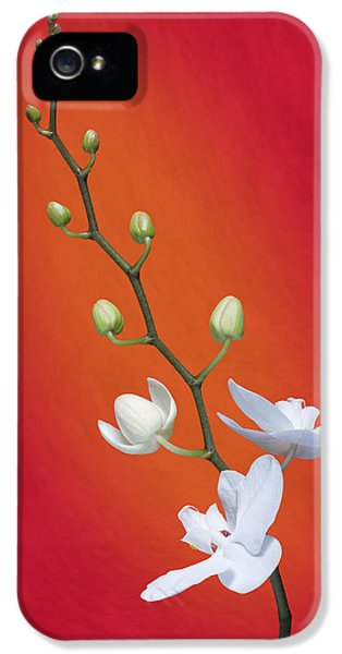 White Orchid Buds On Red IPhone 5 Case
