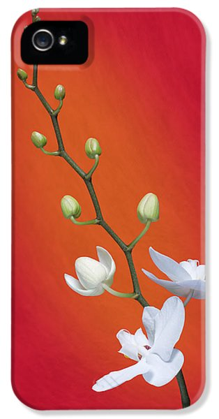 Orchid iPhone 5 Case - White Orchid Buds On Red by Tom Mc Nemar