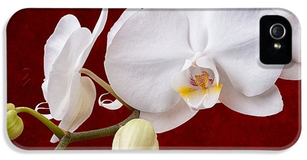 White Orchid Closeup IPhone 5 / 5s Case by Tom Mc Nemar