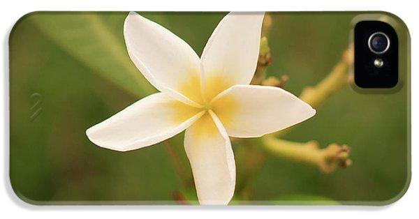 Plumeria Flower iPhone 5 Case - White Plumeria Rubra by Aged Pixel