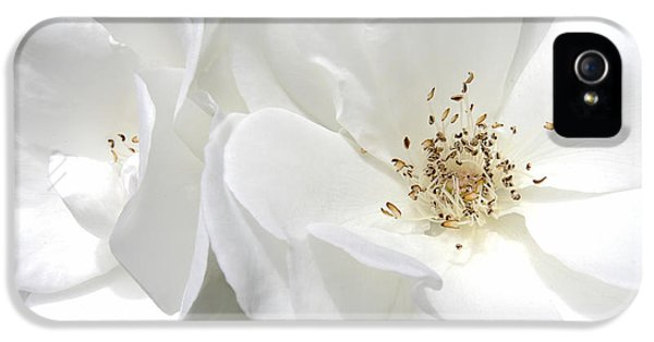 White Roses Macro IPhone 5 Case by Jennie Marie Schell
