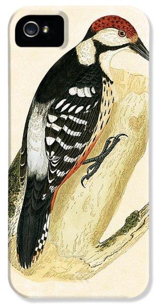 White Rumped Woodpecker IPhone 5 Case