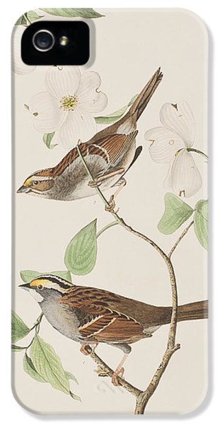 White Throated Sparrow IPhone 5 Case by John James Audubon