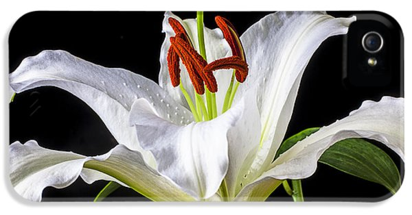 Lily iPhone 5 Case - White Tiger Lily Still Life by Garry Gay