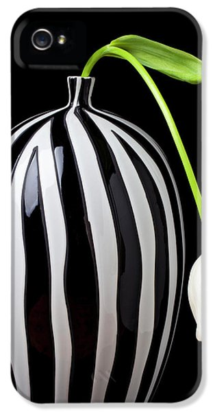 White Tulip In Striped Vase IPhone 5 Case by Garry Gay