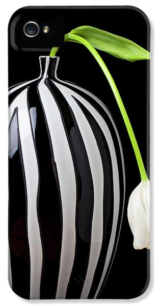 Tulip iPhone 5 Case - White Tulip In Striped Vase by Garry Gay