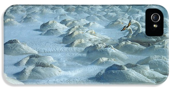 Whooper Swans In Snow IPhone 5 / 5s Case by Teiji Saga and Photo Researchers