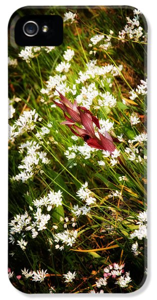 Agriculture iPhone 5 Cases - Wild Flowers iPhone 5 Case by Stylianos Kleanthous