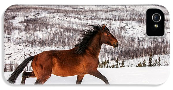 Wild Horse IPhone 5 / 5s Case by Todd Klassy