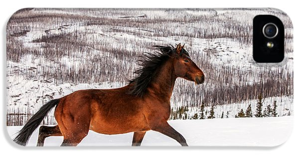 Horse iPhone 5 Case - Wild Horse by Todd Klassy