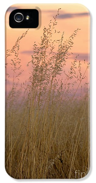 IPhone 5 Case featuring the photograph Wild Oats by Linda Lees