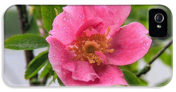 Wild Rose With Dew IPhone 5 Case