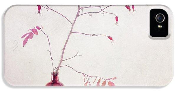 Wild Rosehips In A Bottle IPhone 5 Case by Priska Wettstein