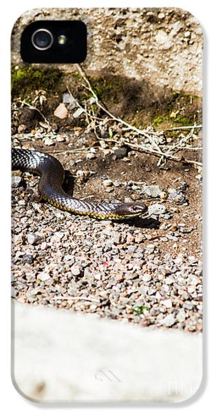 Wild Tiger Snake IPhone 5 Case