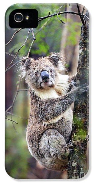 Koala iPhone 5 Case - Wildest Dreams by Evelina Kremsdorf