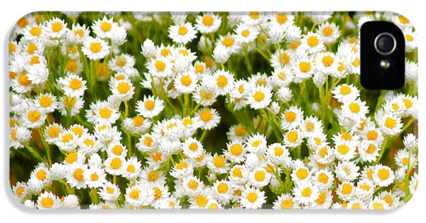 iPhone 5 Case - Wildflowers by Holly Kempe