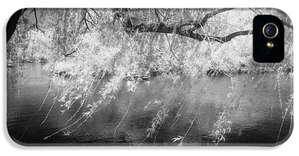 Willow Tree Lake II IPhone 5 Case by Dave Beckerman