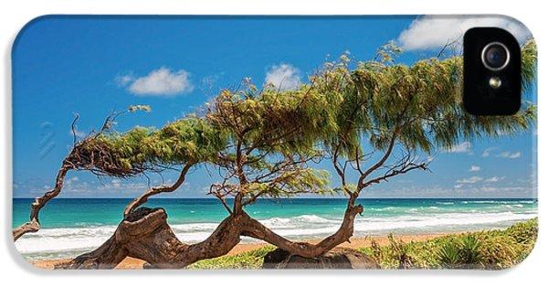 Wind Blown Tree IPhone 5 Case