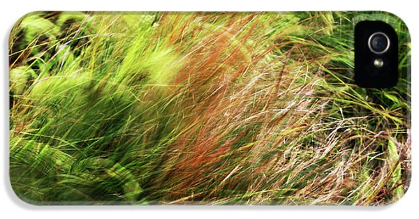 Windblown Grasses IPhone 5 Case