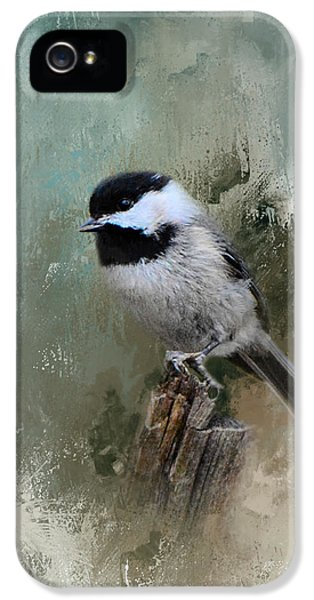Winter Chickadee IPhone 5 / 5s Case by Jai Johnson