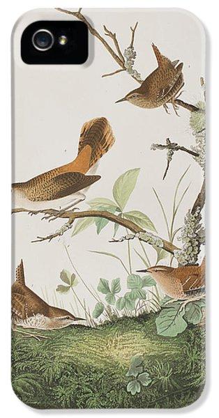 Wren iPhone 5 Case - Winter Wren Or Rock Wren by John James Audubon