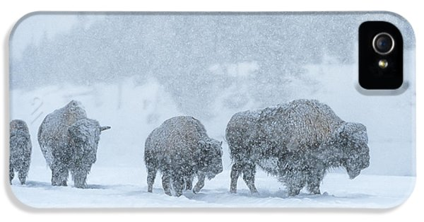 Winter's Burden IPhone 5 Case by Sandra Bronstein