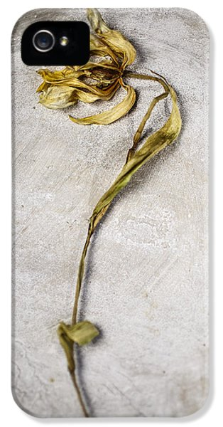 Tulip iPhone 5 Case - Withered by Nailia Schwarz