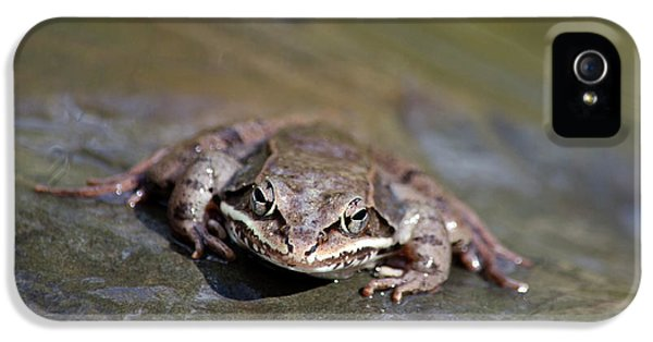 IPhone 5 Case featuring the photograph Wood Frog Close Up by Christina Rollo