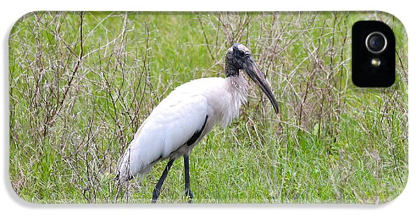 Wood Stork In The Marsh IPhone 5 Case by Carol Groenen