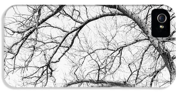 Wooden Arteries IPhone 5 Case by Az Jackson