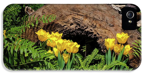 Woodland Tulip Garden IPhone 5 Case by Tom Mc Nemar