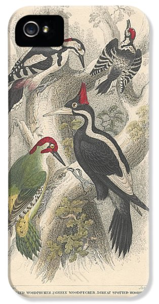 Woodpeckers IPhone 5 Case