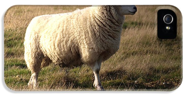 Sheep iPhone 5 Case - Woolly Coat by Sharon Lisa Clarke