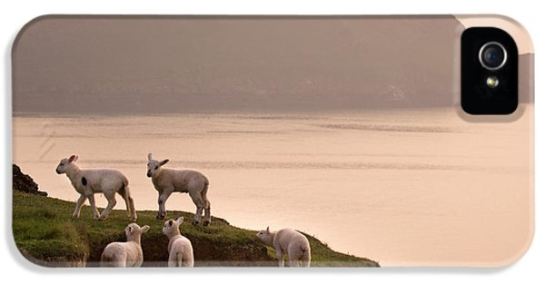 Sheep iPhone 5 Case - Worms Head by Angel Ciesniarska