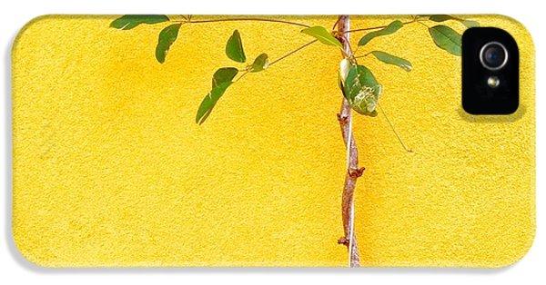 iPhone 5 Case - Yellow #2 by Julie Gebhardt