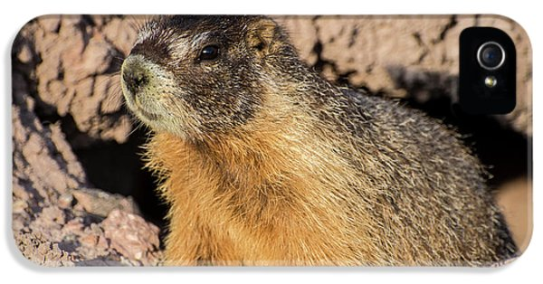 Yellow-bellied Marmot - Capitol Reef National Park IPhone 5 Case