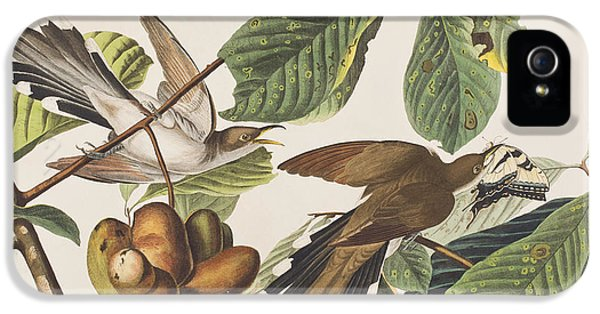 Yellow Billed Cuckoo IPhone 5 / 5s Case by John James Audubon