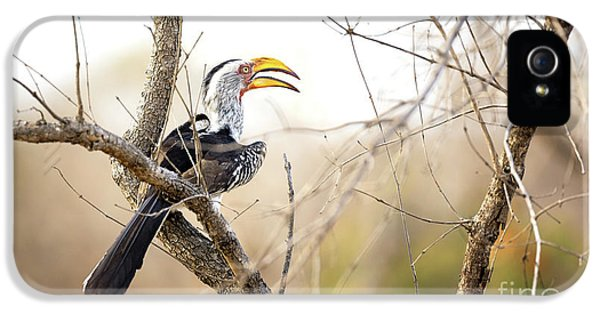 Yellow-billed Hornbill Sitting In A Tree.  IPhone 5 / 5s Case by Jane Rix