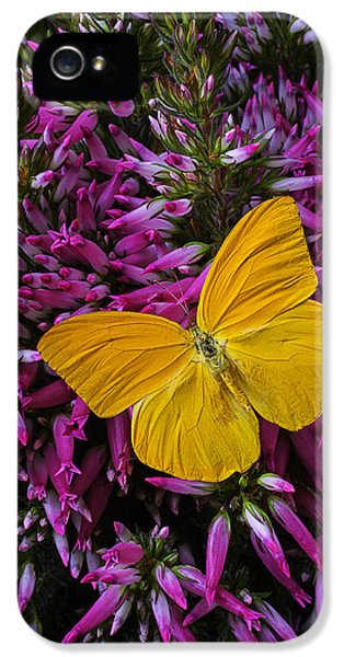 Yellow Butterfly On Italian Ventricosa IPhone 5 Case