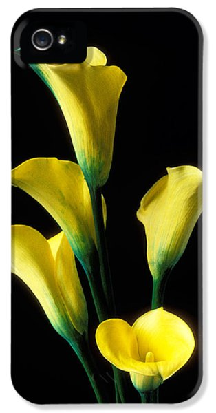 Lily iPhone 5 Case - Yellow Calla Lilies  by Garry Gay