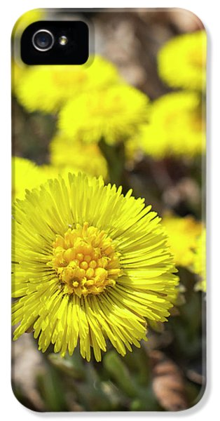 IPhone 5 Case featuring the photograph Yellow Coltsfoot Flowers by Christina Rollo